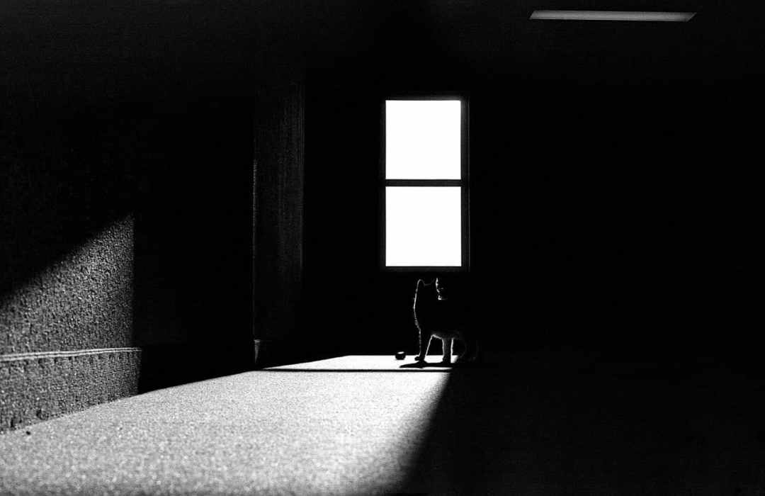 After work ritual - Canon AE-1 Program - Kodak Tri-X 400