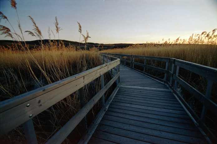Nicolle Flats Nature Refuge - Canon Elan II - Cinestill 50D