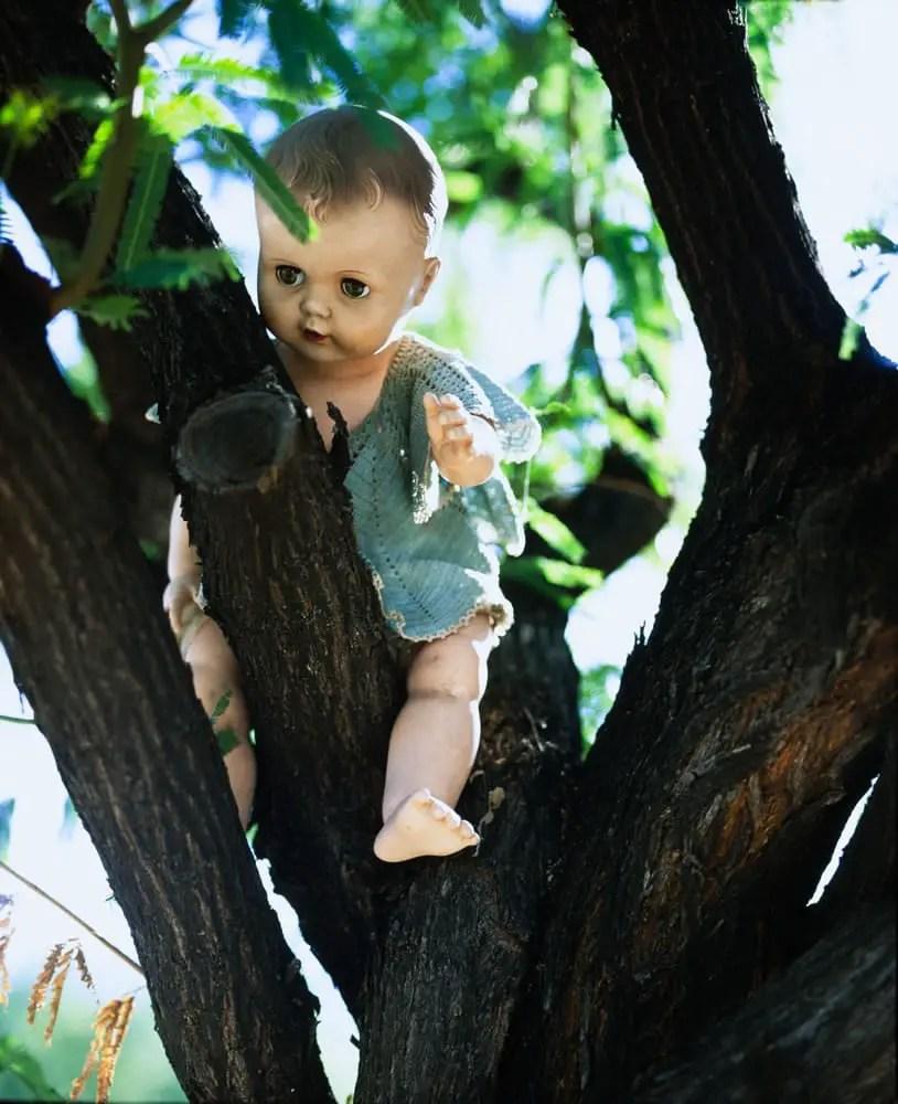 Creepy Doll in Mesquite Tree, Mamiya RB67, 127mm 3.5KL, Fuji Velvia 50
