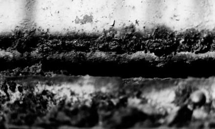 Pure rot – Ilford HP5+ (120)