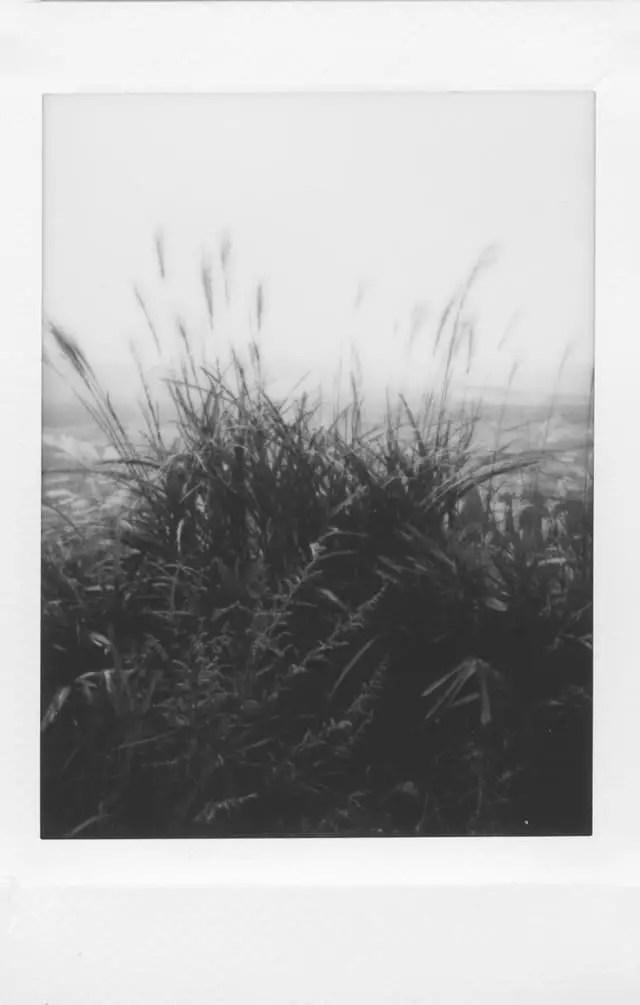 Photographer: Alex Yates Title: Grasslands Location: Aso-san caldera, Japan Camera: Fuji Mini 90 NEO CLASSIC