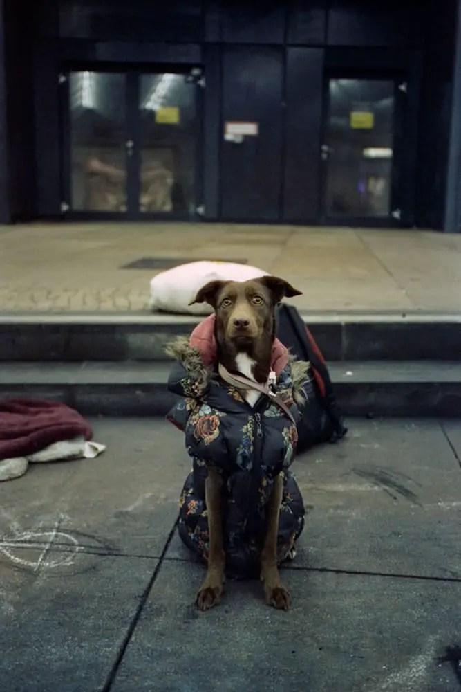 Santa's little helper - Leica M6, Zeiss ZM C-Biogon 35mm f/2.8, Cinestill 800T.