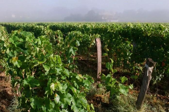 Vignobles Vauthier Maziere, Saint-Emilion