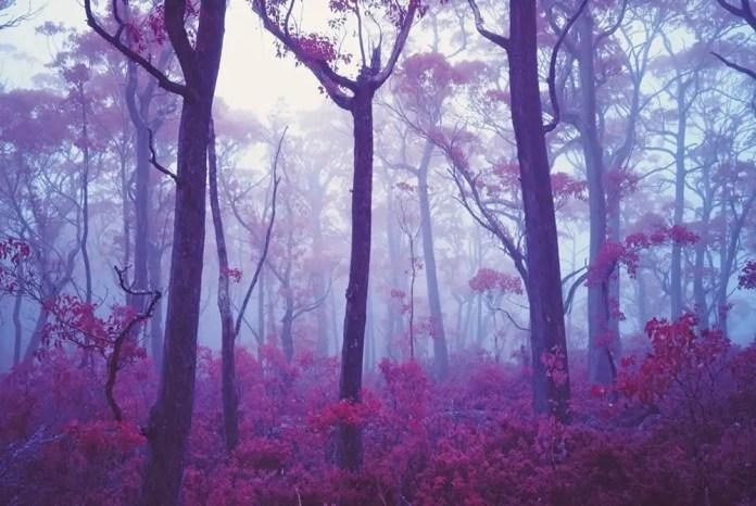 Red Mist - Fuji GW690III, Kodak Aerochrome