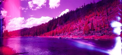 Madison Falls, Yellowstone National Park - Kodak AEROCHROME III 1443 shot at EI 400. Color infrared aerial surveillance film in 120 format shot as 6x12. Shot with #21 orange filter.