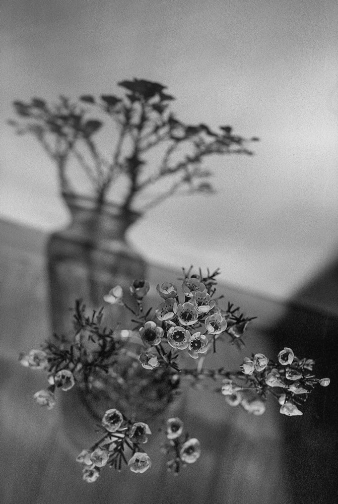 Vase and shadows, Minolta X-700, Kodak Tri-X 400