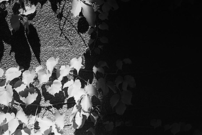 Light and shade - Shot on JCH Streetpan 400 at EI 12. Black and white negative film in 35mm format. R72 720nm filter.