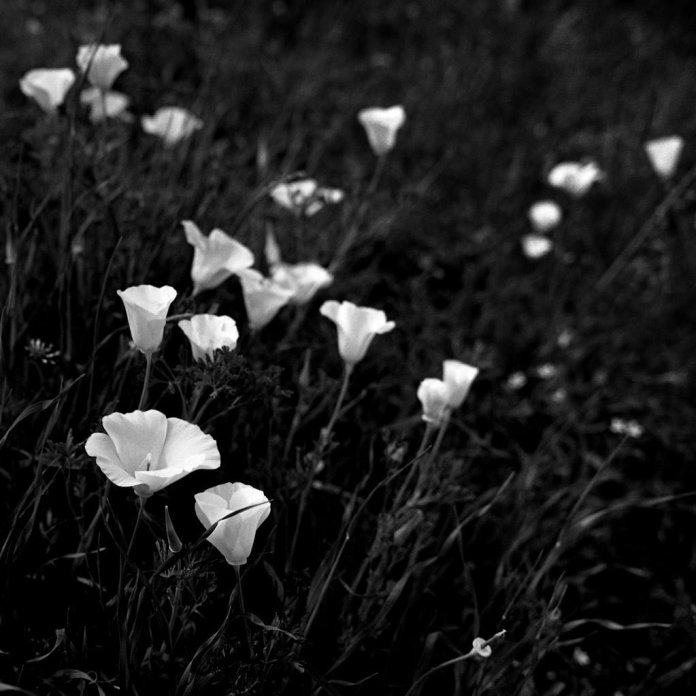 Illusive Photography - @aantiporda