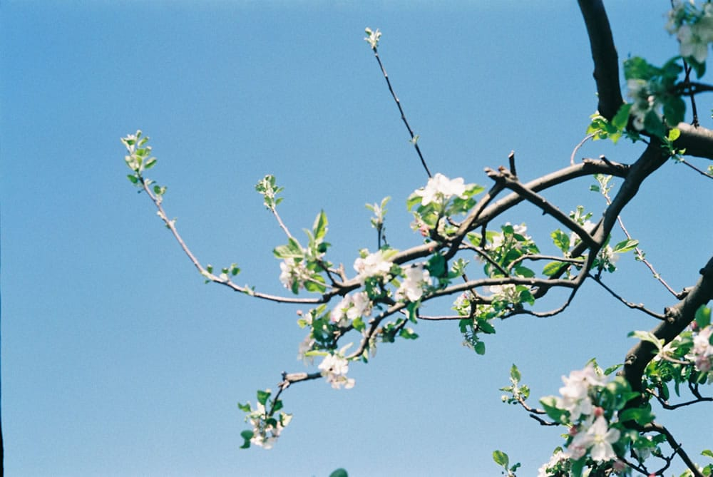 Fujicolor 200 - Apple tree