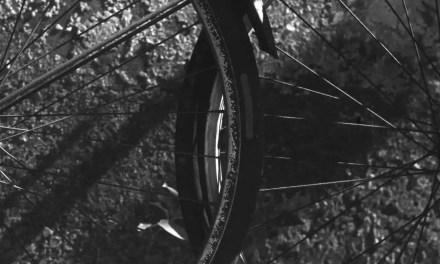 Venn – Rollei Superpan 200 (120)