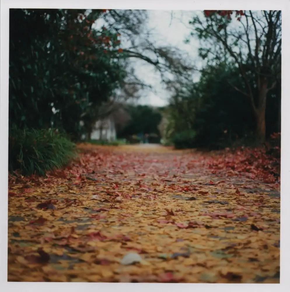 Leaves - Bronica S2A - F/2.8, 125th sec, Kodak Ektar 100