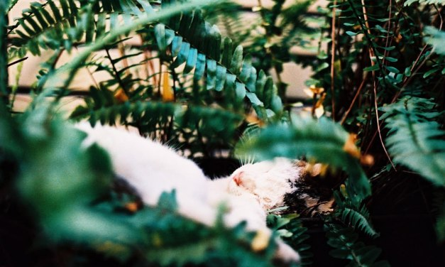 Slumber – Shot on Kodak PROFESSIONAL ELITE Chrome 100 EB-3 at EI 100 (35mm format)