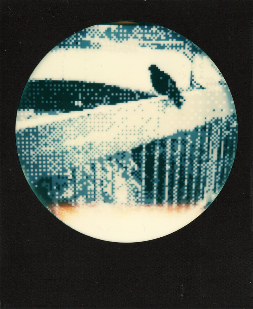 8-bit bird - Game Boy Camera photo on Impossible film, 2017