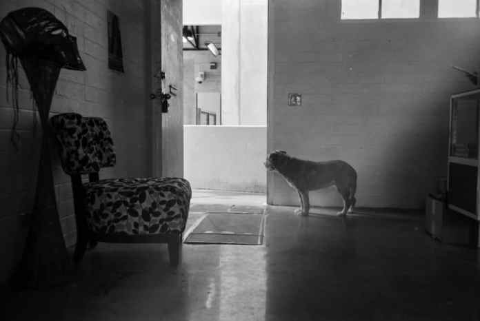 ken 🌿‏ - @kookthecat whatcha lookin' at, doggo? canon 7, ilford pan f+ (rated 50), xtol at @HungryEar in kakaʻako @summerfilmparty #summerfilmparty #home