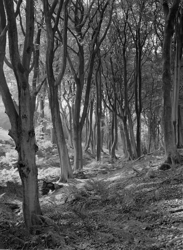 James Horrobin - Trees