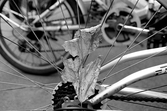 01 Lucky New SHD 100 - EI 100 over exposed