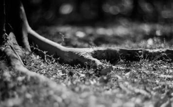 Where the wild things grow - Shot on Fomapan 200 Creative at EI 200 - Black and white negative film in 4x5 format - AEROgraphic - Kodak Aero Ektar 178 f2.5