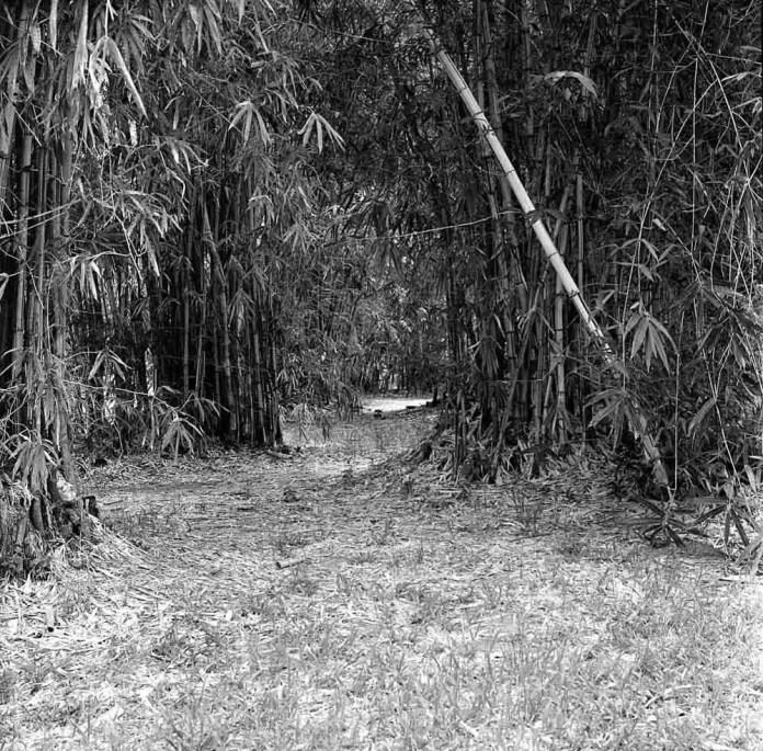 The gateway - Shot on Bergger Pancro 400 at EI 200. Black and white negative film in 120 format shot as 6x6. Orange 21 filter, Hasselblad Planar F 80 F/2.8, Pyrocat-HD 1:2:100