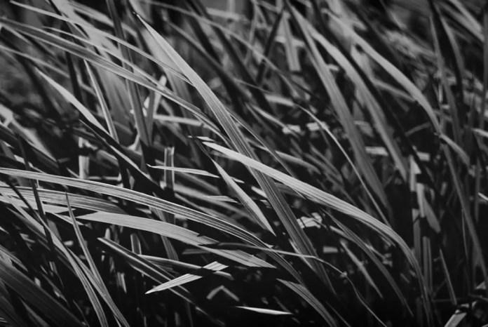 Blades - Shot on FILM Ferrania FERRANIA P30 Alpha at EI 80. Black and white negative film in 35mm format. Reversal developed.