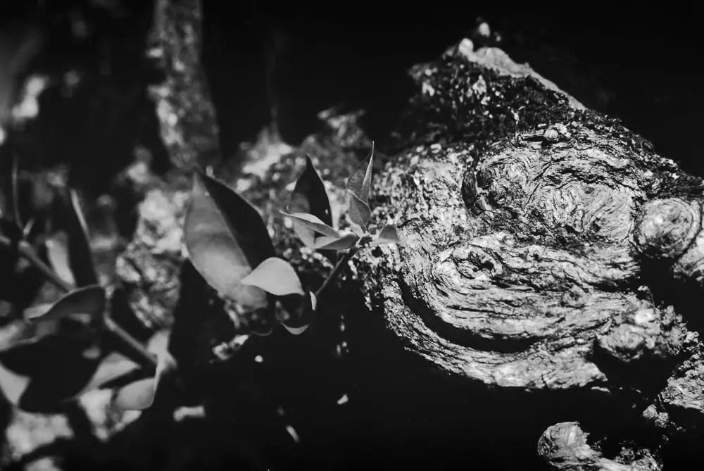 Stumped - Shot on FILM Ferrania FERRANIA P30 Alpha at EI 80. Black and white negative film in 35mm format. Reversal developed.
