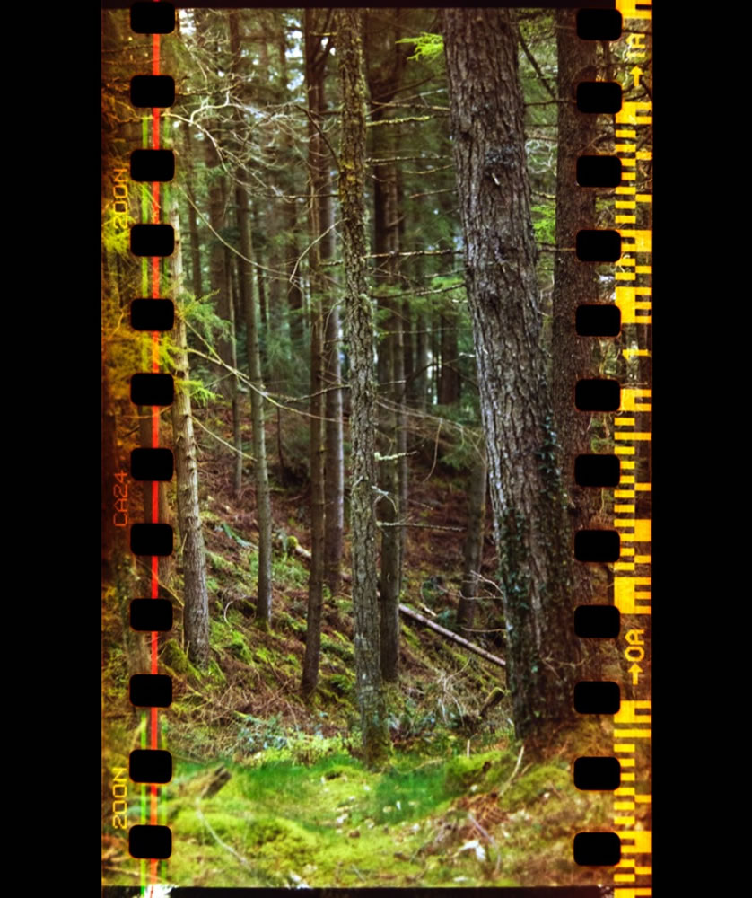 Pine Forest, Gwydyr Forest Park, Cae'm y Coed, Snowdonia. 12/04/2017 Hasselblad 500C Agfa 200 (Poundshop film) 35mm f2.0 1/60