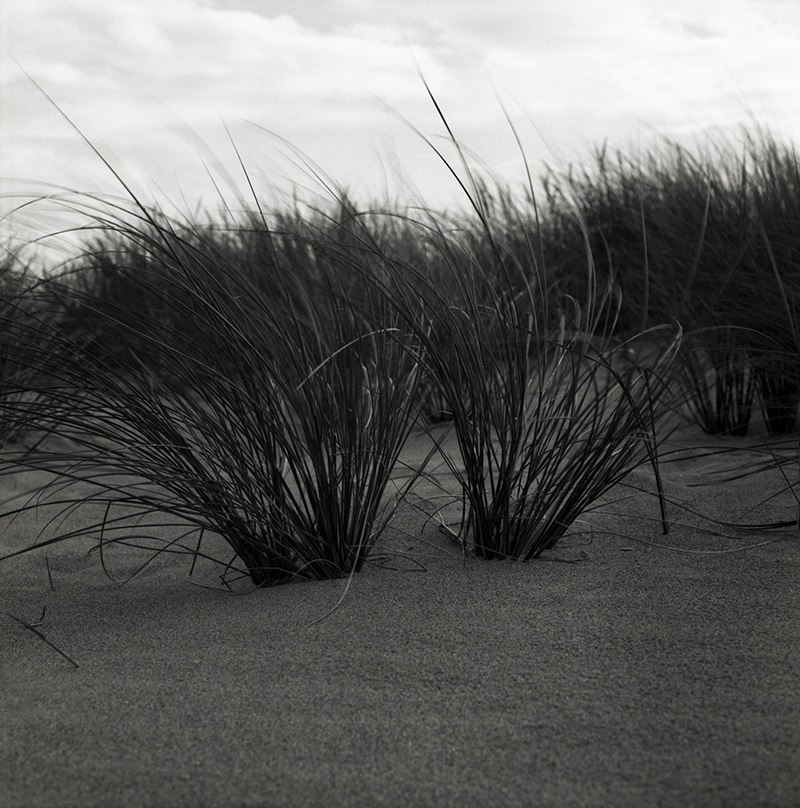 Mamiya C220 Professional TLR - Marram Grass