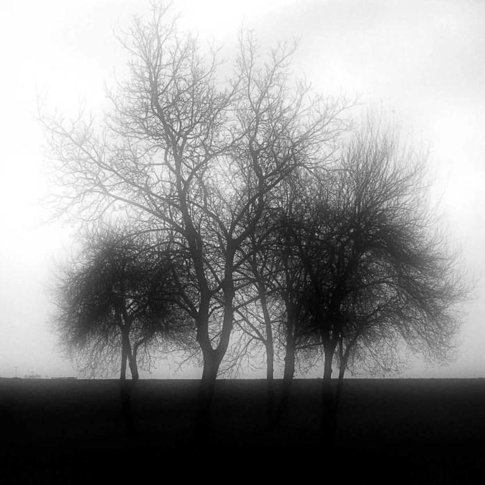 TREE STUDY - YASHICA 12, LOMOGRAPHY EARL GRAY 100, ZAGREB
