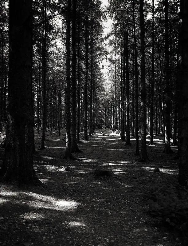 Cod Beck Plantation - Bronica ETRS. Kodak Ektar 100, 1/30 @ f/4, 40mm lens