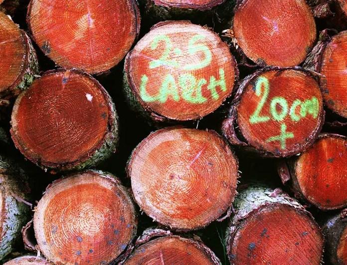 Logs - Bronica ETRS. Kodak Ektar 100, 1/60 @ f5.6 75mm lens