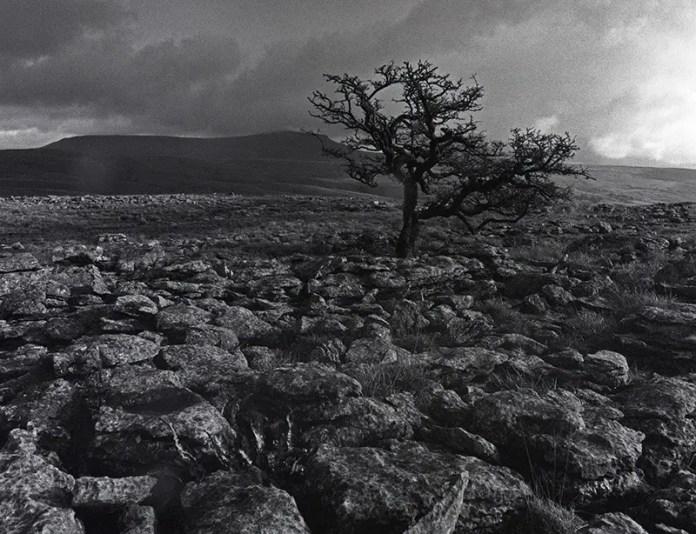 Pavement Tree - Bronica ETRS. Bergger Pancro 400. 1/125 @ f/11, 40mm lens