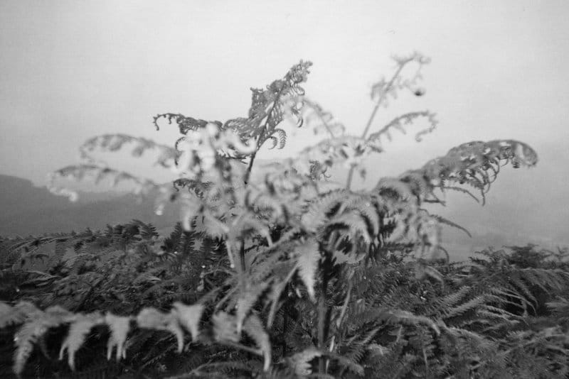 Mountain Fern in a cloud, Lake District, 2014. Shot on ILFORD Disposable Camera, ILFORD HP5 PLUS