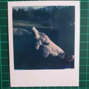 Test 2: Original Polaroid, pre-lift