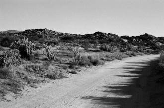 Road Bend - ILFORD Delta 100 Professional (+)