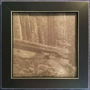 An introduction to Platinum/Palladium printing - Rainer Framed