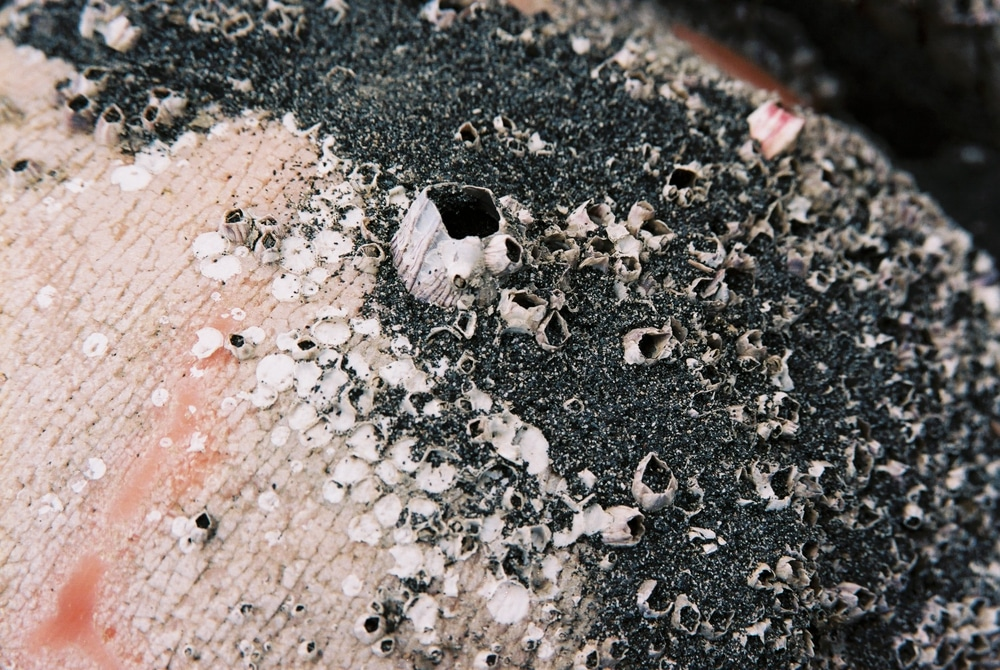 Blistering barnacles Shot on Kodak VISION3 200T 5213 at EI 200 Color motion picture film in 35mm format