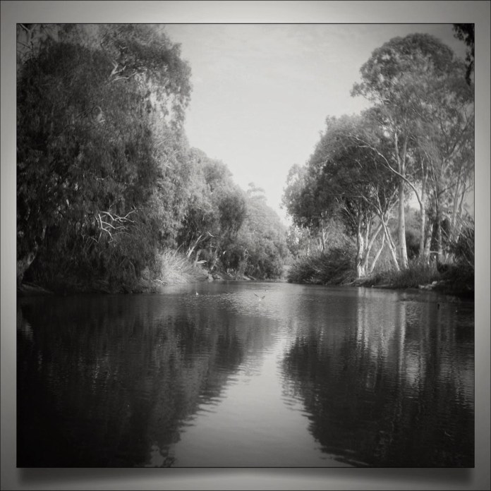 Riverbank, Cinestill 50D converted to black and white, Rolleicord II Triotar.