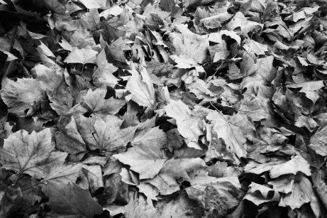 EASTMAN Plus-X 5231 - Fall