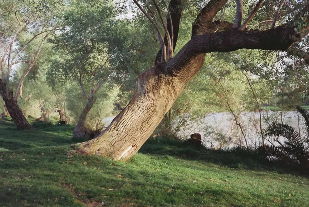 Riverbank, Cinestill 50D, Rollei 35S.
