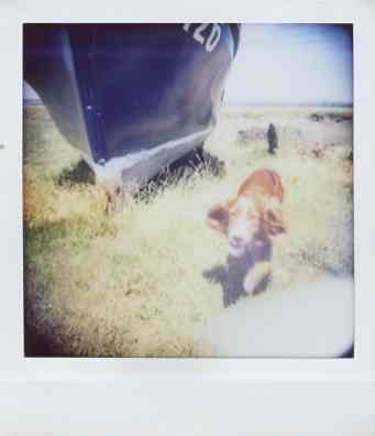 Diana Instant Square - Super wide-angle - Shadow - Dog