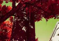 Dripping red - Shot onKodak AEROCHROME III 1443at EI 400. Color infrared aerial surveillance film in 35mm format. Shot with #21 orange filter.