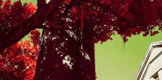 Dripping red - Shot on Kodak AEROCHROME III 1443 at EI 400. Color infrared aerial surveillance film in 35mm format. Shot with #21 orange filter.