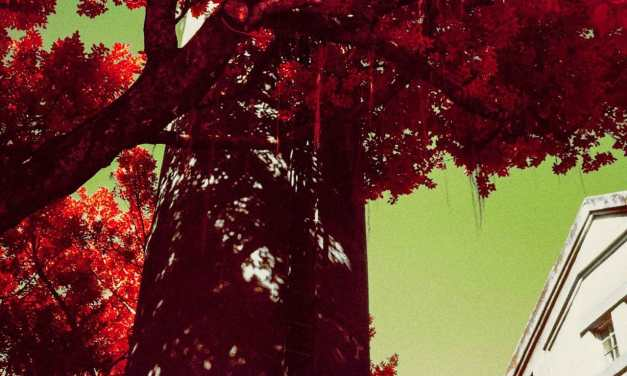 Dripping red –  Shot on Kodak AEROCHROME III 1443 (35mm format)