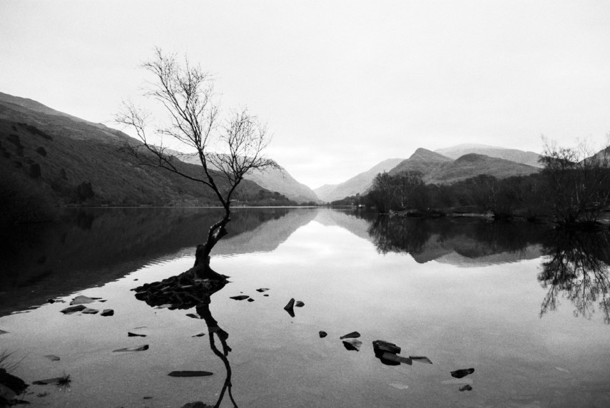 ILFORD Delta 400 Professional / 35mm, Canon EOS 3000v. Llyn Padarn, North Wales. December 2016. Taken very close to where my Dad grew up – this tree is now one of the most photographed in Britain!