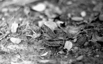 Left on - Shot on Fuji NEOPAN 100 ACROS at EI 100. Black and white negative film in 120 format shot as 6x6. Kodak Aero Ektar 178mm f/2.5.