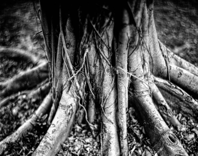 Stumps #01 - Shot on Bergger Pancro 400 at EI 200. Black and white film in 4x5 format. Graflex Pacemaker Speed Graphic. Kodak Aero Ektar 178mm f/2.5. Orange #21 filter.