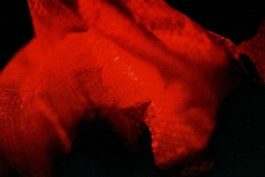 365 textures #02 - Shot on Kodak PROFESSIONAL ELITE Chrome 100 (EB-3) at EI 100. Color reversal (slide) film in 35mm format.