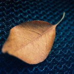365 textures #08 - Shot on Kodak EKTACHROME 160T (ET160 5077) at EI 160. Color reversal (slide) film in 35mm format.