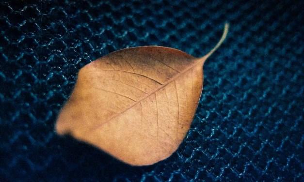 365 textures #08 – Shot on Kodak EKTACHROME 160T (ET160 5077) at EI 160 (35mm format)