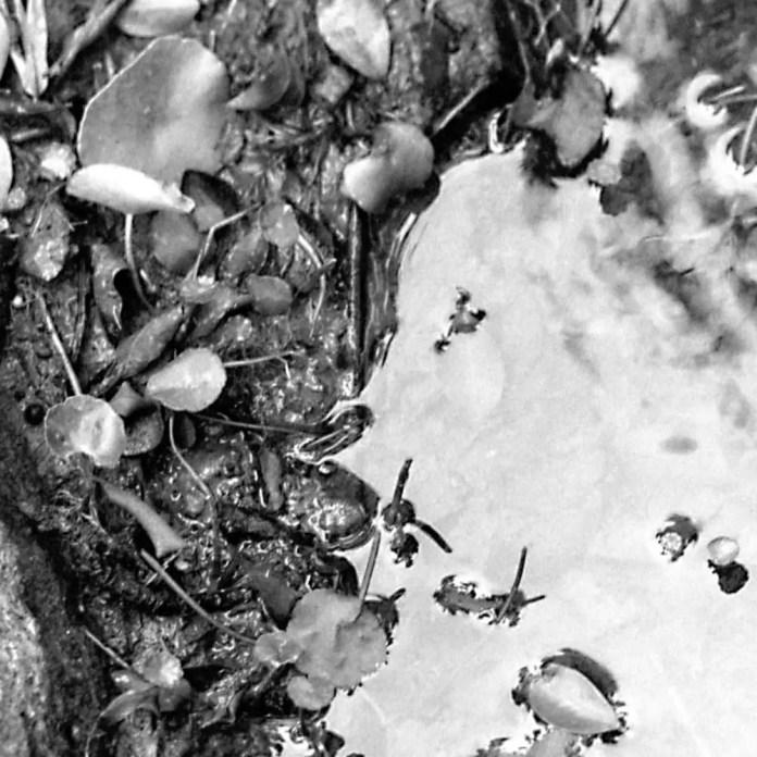 100% crop: Cinestill Df96 Monobath - Fomapan 200 Creative, EI 200 - Kodak Anastigmat 161mm f/4.5