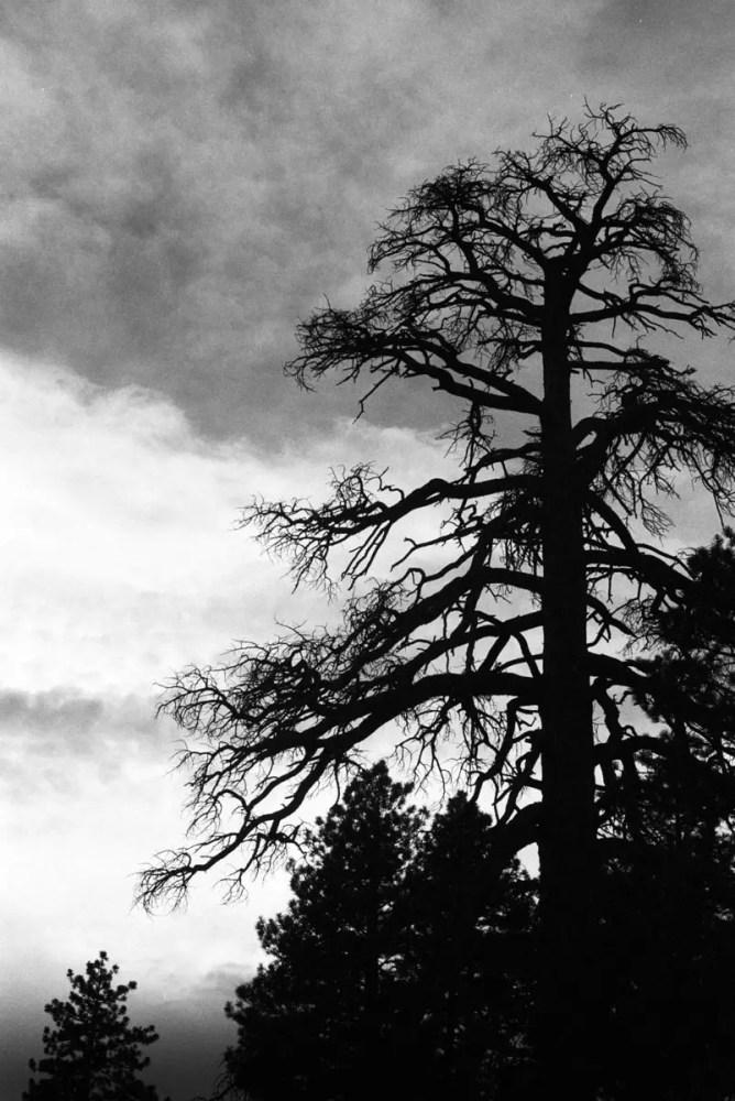 Bryce Canyon Nature, France - Minolta SRT 100x, ILFORD HP5 PLUS